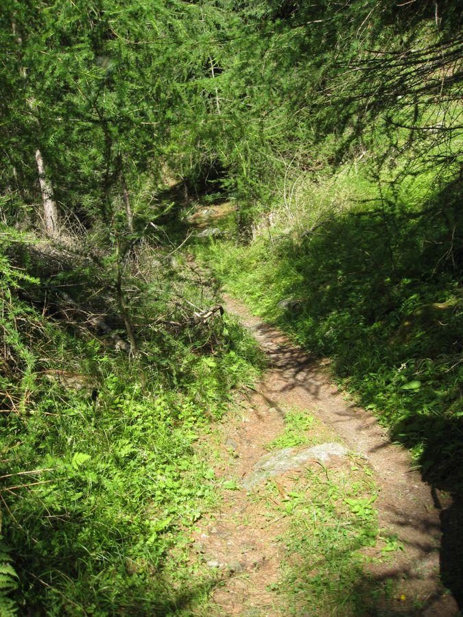 Begin van de trail